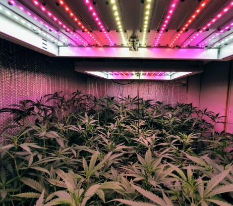 Cannabis Home Growers