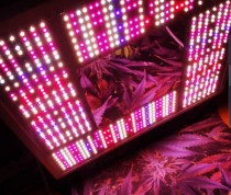 Heisenberg LED Grow Light